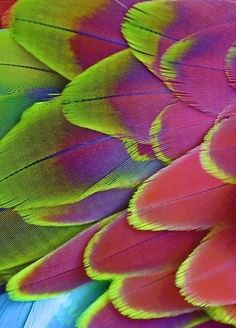 Macaw feather