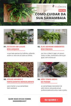 Infográfico - Samambaia  #infografico #samambaia #plantas Garden Plants, Flora, Natural, Green, How To Make, Garden Products, Plantain Ideas, Ferns Garden, Growing Plants