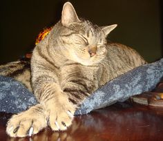 Cats use their claws for a variety of tasks.