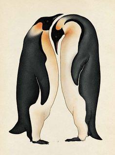 Penguins || Penguins Text © Jenny Broom 2014 Images © Katie Scott 2014 Publisher: Big Picture Press