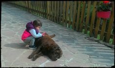 Magia magia, che tanto amore cuccioloso nella pancia di Mora ci sia!! #sisperaprestomamma #sindialabradors #puónasceredaungesto