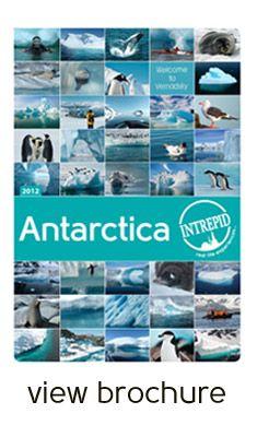Intrepid Travel - Antarctica Cruising