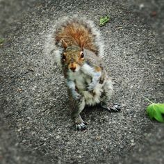 The coolest squirrel in NYC! Squirrel, Fox, Cool Stuff, Photography, Animals, Photograph, Animales, Animaux, Squirrels