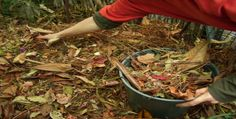 5 Things You Probably Didn't Know About Mulching