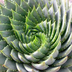 geometry in nature - Szukaj w Google