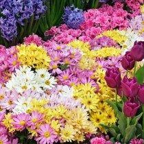 Gif de Rosas Para Enviar Por WhatsApp El Dia Del Amor Y La Amistad Rosas Gif, Plantar, Flowers, Perfume, Friends, Positive Thoughts, Beauty, Amor, Spring Garden
