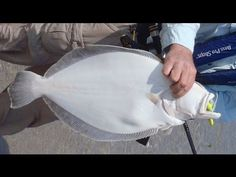 ▶ How to Catch Flounder with Bucktails and Gulp