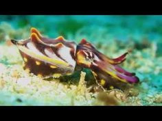 Science Today: Colorful Cephalopods | California Academy of Sciences - YouTube