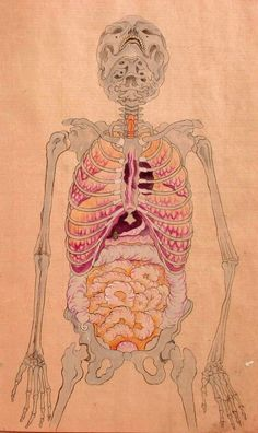 japanese anatomical drawing from the Edo period