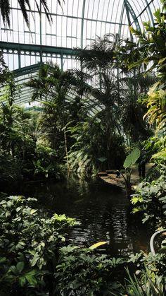 Le jardin des Serres d'Auteuil   Un coin de paradis tropical à Paris - Un petit pois sur dix...