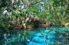 Fern Hammock Springs, Florida | United States