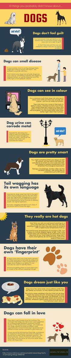 10 Things You Didn't Know About Dogs #infographic #Dogs #Pets