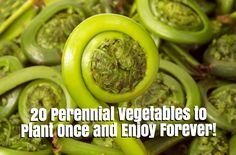 20 Perennial Vegetables to Plant Once and Enjoy Forever!  #gardening #organicgardening #permaculture