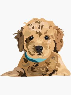 'Golden doodle' Sticker by cpickoski Cute Dog Drawing, Cute Drawings, Goldendoodle Art, Maltipoo, Animal Paintings, Animal Drawings, Abstract Face Art, Doodle Designs, Dog Illustration