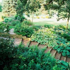 From BHG:  A flagstone path leading down the slope offers a different character and textural contrasts.In place of a rail or a fence, mid-height shrubs fill the space to the narrow side of the path.        Several hostas, which cascade over the stair-stepped path, soften the wood edge.        Shrubs and steadfast perennials, such as daylilies, congregate at the crown of the hill.