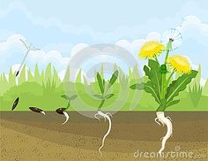 Germination Stock Illustrations, Vectors, & Clipart – Stock Illustrations) - Page 4 School Border, Free To Use Images, Toddler Activities, Clipart, Spring Time, Preschool, Photos, Education, Plants