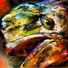 20 Best Red Fish Images Goldfish Red Fish Fishing