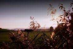 Schilf (Nikon FA / Kodak Ektar 100)