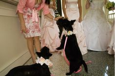 Scottie bridesmaids