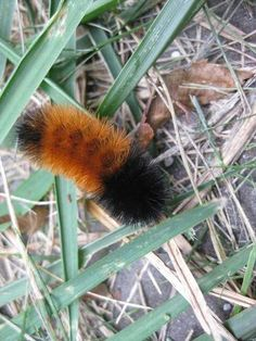 "wooly bears... used to hold them like a   ""Squirmle"" toy and have them walk from hand to hand... now my daughters do it ! LOL"