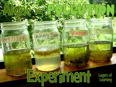 An experiment that shows the affect of pollution on algae. Science Algae and Pollution - Layers of Learning Environmental Science Projects, Science Projects For Kids, Environmental Education, Science Lessons, Science For Kids, Science Activities, Life Science, Plant Science Fair Projects, Earth Science