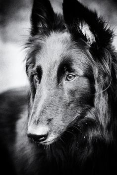 Photograph Groenendael by Adam Emery on 500px