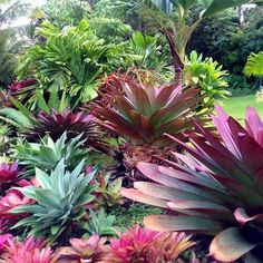 Hale Mohalu Guesthouse is a tropical garden vacation rental on the Big Island of Hawaii. Front House Landscaping, Front Garden Landscape, Florida Landscaping, Tropical Landscaping, Landscaping With Rocks, Tropical Garden Design, Tropical Backyard, Tropical Plants, Succulents Garden
