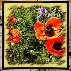 Tanya Lynn Photography  Beautiful Garden Print $75.00