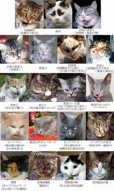 【画像】 ダークサイドに堕ちたような眼差しの日本のネコが海外で話題に