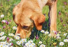 If You Have a Pet, Get Rid Of These Plants Immediately! - The Lost Herbs Custom Dog Collars, Dog Collars & Leashes, Dog Leash, Dog Collar With Name, Dog Collar Tags, Dog Pictures, Animal Pictures, What Cats Can Eat, Allergic To Cats