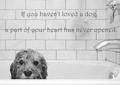 If you haven't love a dog,a part of your heart has never opened