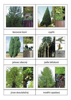 Znáte naše stromy? Poznávání stromů. Lze využít jako pexetrio.