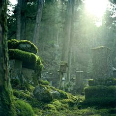 Is there anything more beautiful than a cemetery gone back to nature? Or more mysterious?