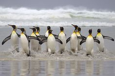 Ever since I was little I've wanted to go to the Falkland Islands! And they have penguins! :D