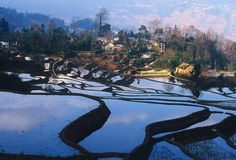 China Rice Field Art | Rice step field China 2 by ~PhotoManExtreme on deviantART