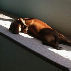 One tired hound!!