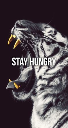Stay Hungry. Head over to www.V3Apparel.com/MadeToMotivate to download this wallpaper and many more for motivation on the go! / Fitness Motivation / Workout Quotes / Gym Inspiration / Motivational Quotes / Motivation