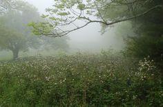 Unaka Mountain just off the Appalachian Trail