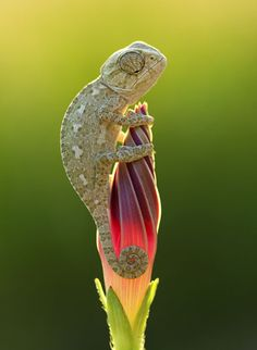 Chameleon Macro Photography 3 25 Breathtaking Moments of Nature & Macro Photography