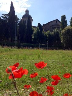 Coelian Hill, poppies and the church of St. John and St. Paul. Learn . Live. Love. Rome. With www.afriendinrome.it