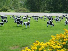 cow lawn ornaments -- hehe -- want these