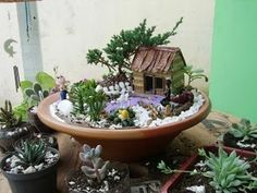 indoor garden - Google leit