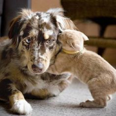 Every Cat should have it's own dog!!!!