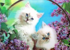DC-19 White Kittens 3D Picture