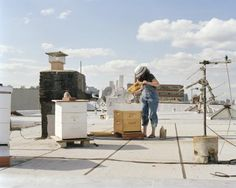 Rooftop Beekeeping in Brooklyn.