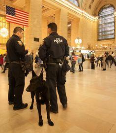 Police dog by vpickering, via Flickr