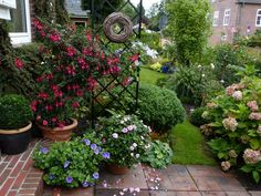 Rosen und Clematis - Clerotiker 2014 - Seite 59 - Rund um die Rose - Mein schöner Garten online