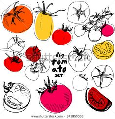Big set of sketched tomato. Great set of hand drawn tomatoes isolated on white…