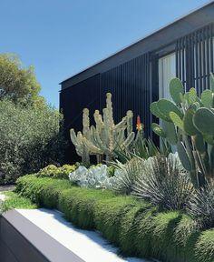Dry Garden, Green Garden, Xeriscaping, Coastal Gardens, Australian Garden, Garden Landscape Design, Green Landscape, Agaves, Rooftop Garden