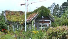 appelsiinipuun alla: Vierailu siirtolapuutarhassa. Ruskeasuon siirtolapuutarha, Helsinki
